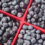 Chopines de bleuets - Blueberry Pints