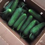 Concombres libanais - Lebanese Cucumbers