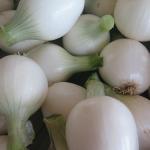 Oignons blancs - White Onions BIS