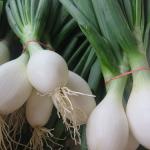 Oignons blancs - White onions