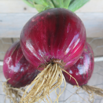 Oignons rouges - Red Onions